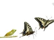 Transformasi Bisnis Akan Terjadi Ketika 3 Hal Ini Terpenuhi