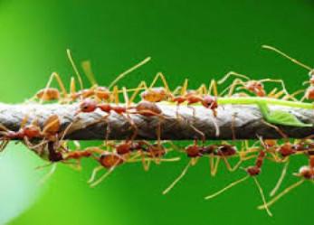 Belajar Ilmu Sales Marketing dari Semut